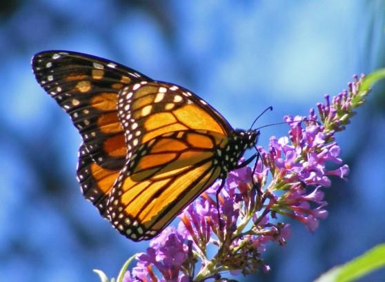 butterfly-04-1024x752