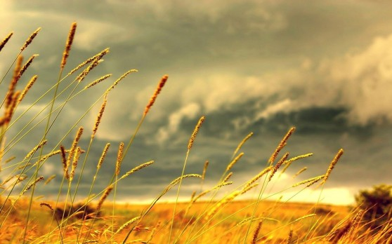 yellow-grass-in-the-wind-6226